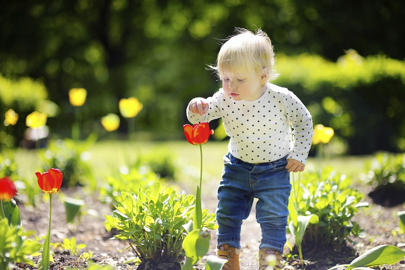 Toddler smelling red tulip in the garden