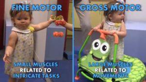 fine motor versus gross motor